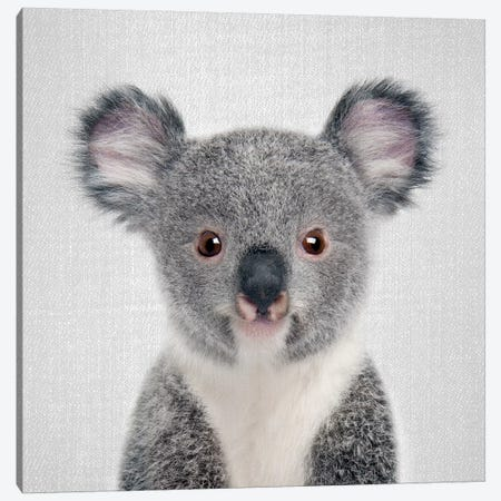 Baby Koala Canvas Print #GAD8} by Gal Design Canvas Print