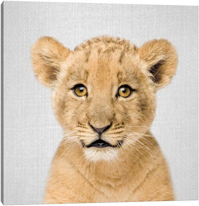 Baby Lion Canvas Art Print
