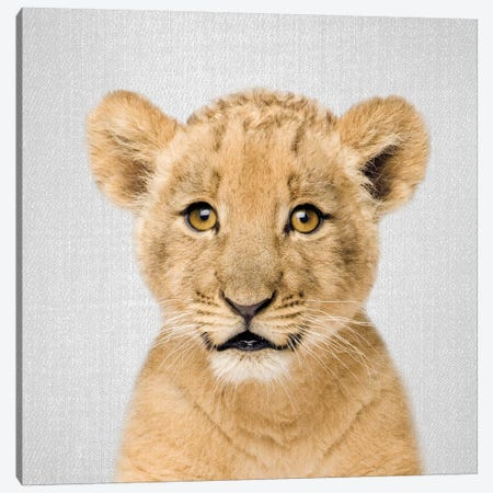 Baby Lion Canvas Print #GAD9} by Gal Design Art Print