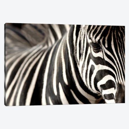 Zebra V Canvas Print #GAN104} by Goran Anastasovski Canvas Art