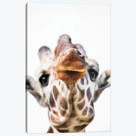Giraffe Close Canvas Print #GAN105} by Goran Anastasovski Canvas Wall Art