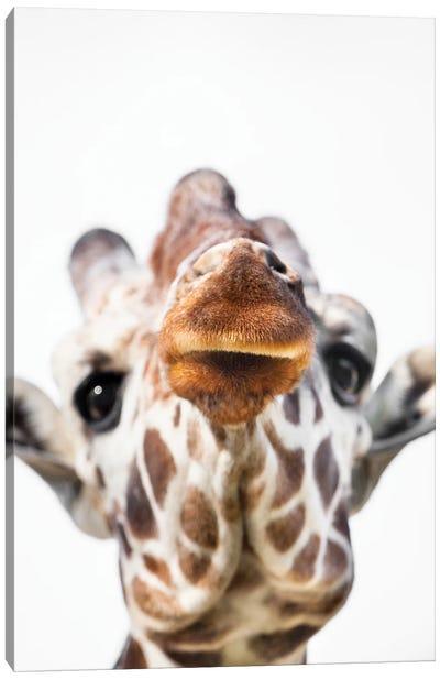 Giraffe Close Canvas Art Print