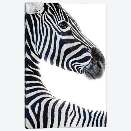 Zebra 6 Canvas Print #GAN106} by Goran Anastasovski Canvas Artwork