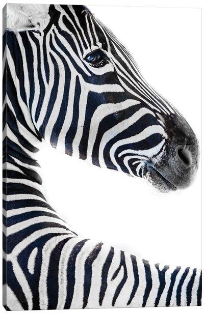 Zebra 6 Canvas Art Print