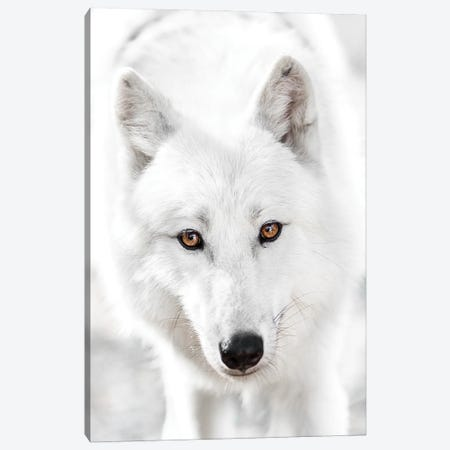 White Wolf Canvas Print #GAN107} by Goran Anastasovski Canvas Wall Art