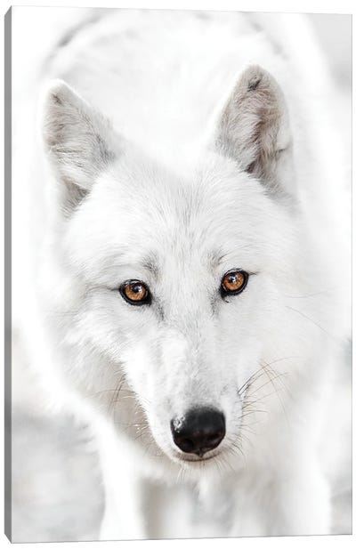 White Wolf Canvas Art Print