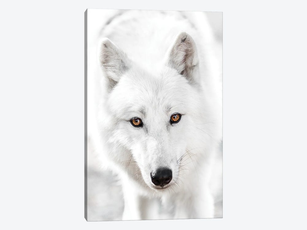 White Wolf 1-piece Art Print