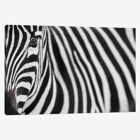 Zebra 20 Canvas Print #GAN110} by Goran Anastasovski Canvas Art
