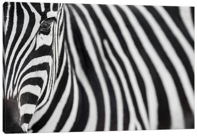 Zebra 20 Canvas Art Print