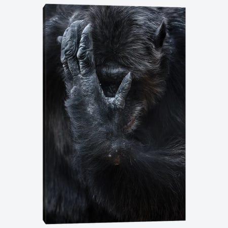 Chimpanzee I Canvas Print #GAN12} by Goran Anastasovski Canvas Art Print