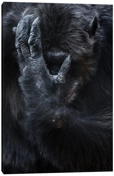 Chimpanzee I Canvas Art Print