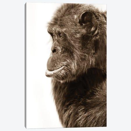 Chimpanzee III Canvas Print #GAN14} by Goran Anastasovski Canvas Art