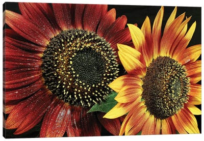 Flower I Canvas Art Print