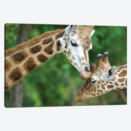 Giraffe In Love Canvas Print #GAN27} by Goran Anastasovski Art Print