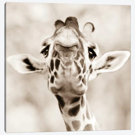 Giraffe Look Canvas Print #GAN28} by Goran Anastasovski Canvas Artwork