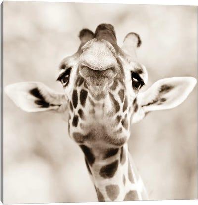 Giraffe Look Canvas Art Print
