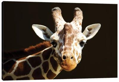 Giraffe VI Canvas Art Print