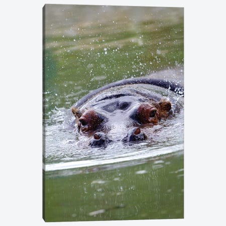 Hippo II Canvas Print #GAN39} by Goran Anastasovski Canvas Art Print