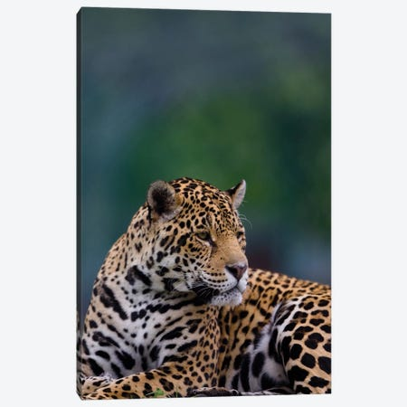 Jaguar 3-Piece Canvas #GAN47} by Goran Anastasovski Canvas Print