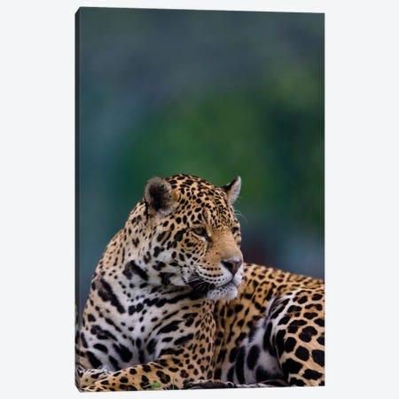 Jaguar Canvas Print #GAN47} by Goran Anastasovski Canvas Print