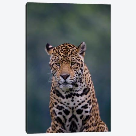 Jaguar I Canvas Print #GAN48} by Goran Anastasovski Canvas Wall Art