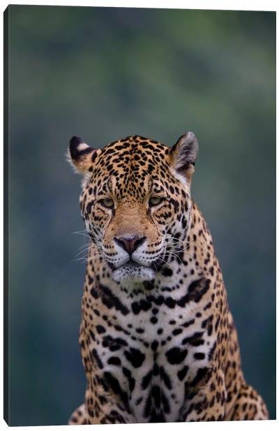 Jaguar I Canvas Art Print