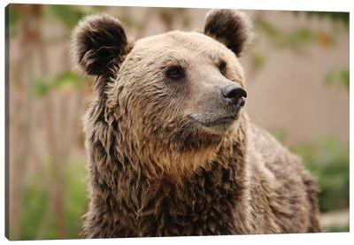 Bears III Canvas Art Print