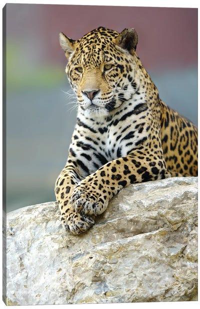 Jaguar III Canvas Art Print