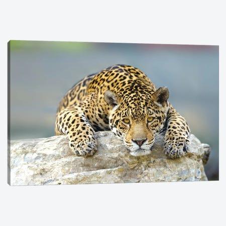 Jaguar XII 3-Piece Canvas #GAN54} by Goran Anastasovski Canvas Art