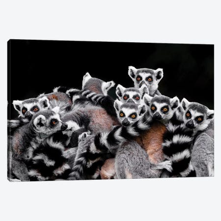 Lemurs Canvas Print #GAN56} by Goran Anastasovski Canvas Art