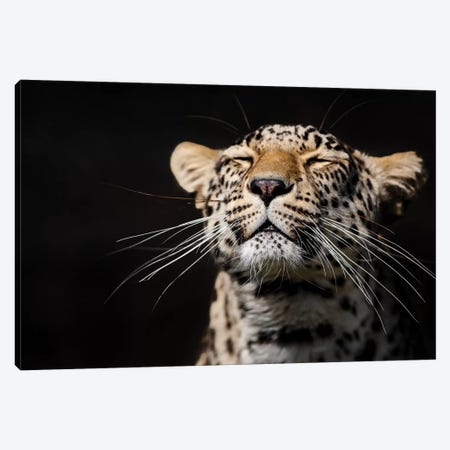 Leopard I Canvas Print #GAN57} by Goran Anastasovski Canvas Wall Art