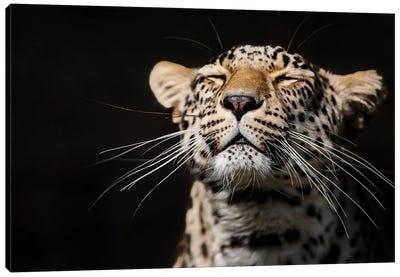 Leopard I Canvas Art Print
