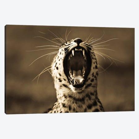 Leopard V Canvas Print #GAN58} by Goran Anastasovski Art Print