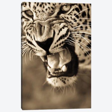 Leopard VIII Canvas Print #GAN59} by Goran Anastasovski Art Print