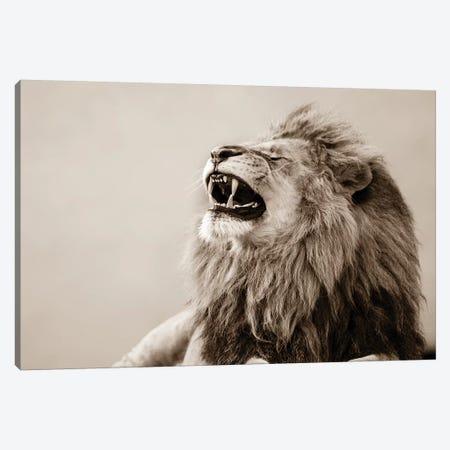 Lion Canvas Print #GAN63} by Goran Anastasovski Canvas Artwork