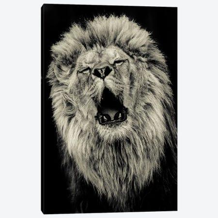 Lion IV Canvas Print #GAN66} by Goran Anastasovski Art Print