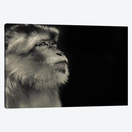 Monkey Canvas Print #GAN74} by Goran Anastasovski Canvas Wall Art