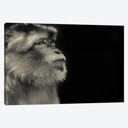 Monkey Canvas Print #GAN74} by Goran Anastasovski Canvas Wall Art