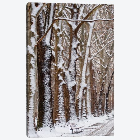 Nature Snow Canvas Print #GAN77} by Goran Anastasovski Canvas Art