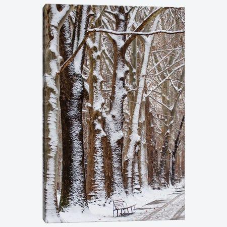 Nature Snow Canvas Print #GAN77} by Goran Anastasovski Canvas Art