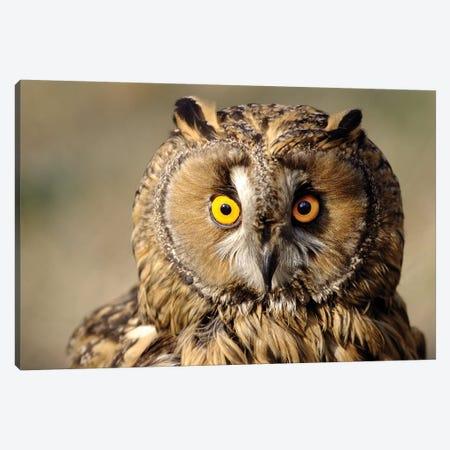 Owl Canvas Print #GAN78} by Goran Anastasovski Art Print