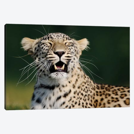 Smiling Leopard Canvas Print #GAN83} by Goran Anastasovski Canvas Art