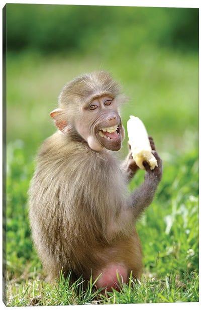 Smiling Monkey Canvas Art Print