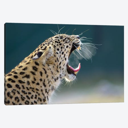 Smoking Leopard Canvas Print #GAN85} by Goran Anastasovski Canvas Print