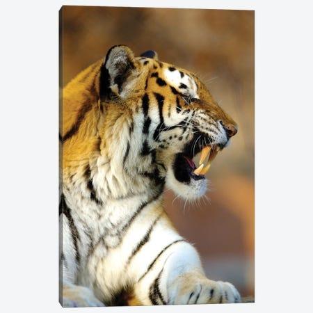 Tiger 3-Piece Canvas #GAN87} by Goran Anastasovski Canvas Print