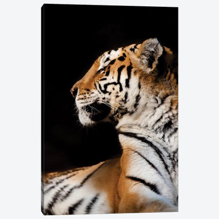 Tiger I Canvas Print #GAN89} by Goran Anastasovski Canvas Wall Art