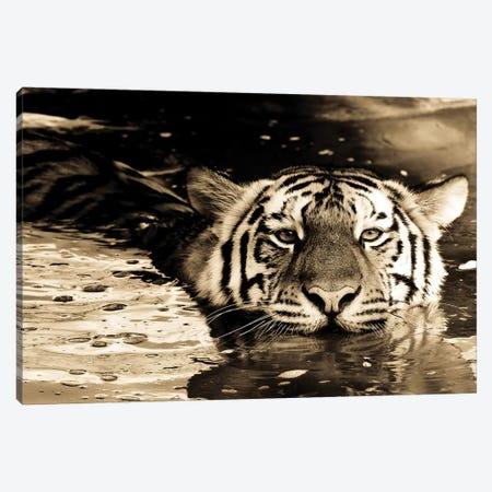 Tiger IX Canvas Print #GAN93} by Goran Anastasovski Canvas Print