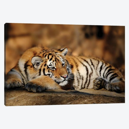 Tiger XII Canvas Print #GAN96} by Goran Anastasovski Canvas Wall Art
