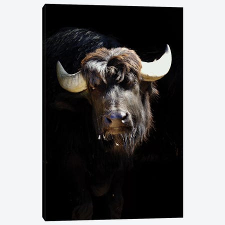 Bison Canvas Print #GAN9} by Goran Anastasovski Canvas Print