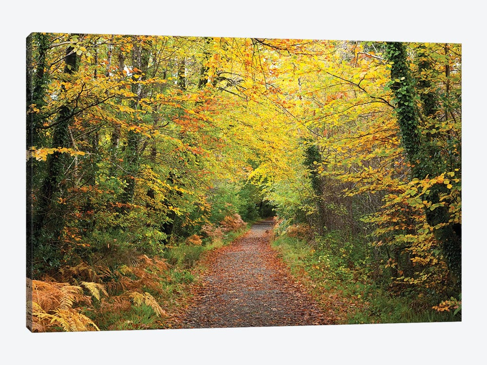 Autumn Walking Path In Tourmakeady Woods, County Mayo, Ireland 1-piece Canvas Print